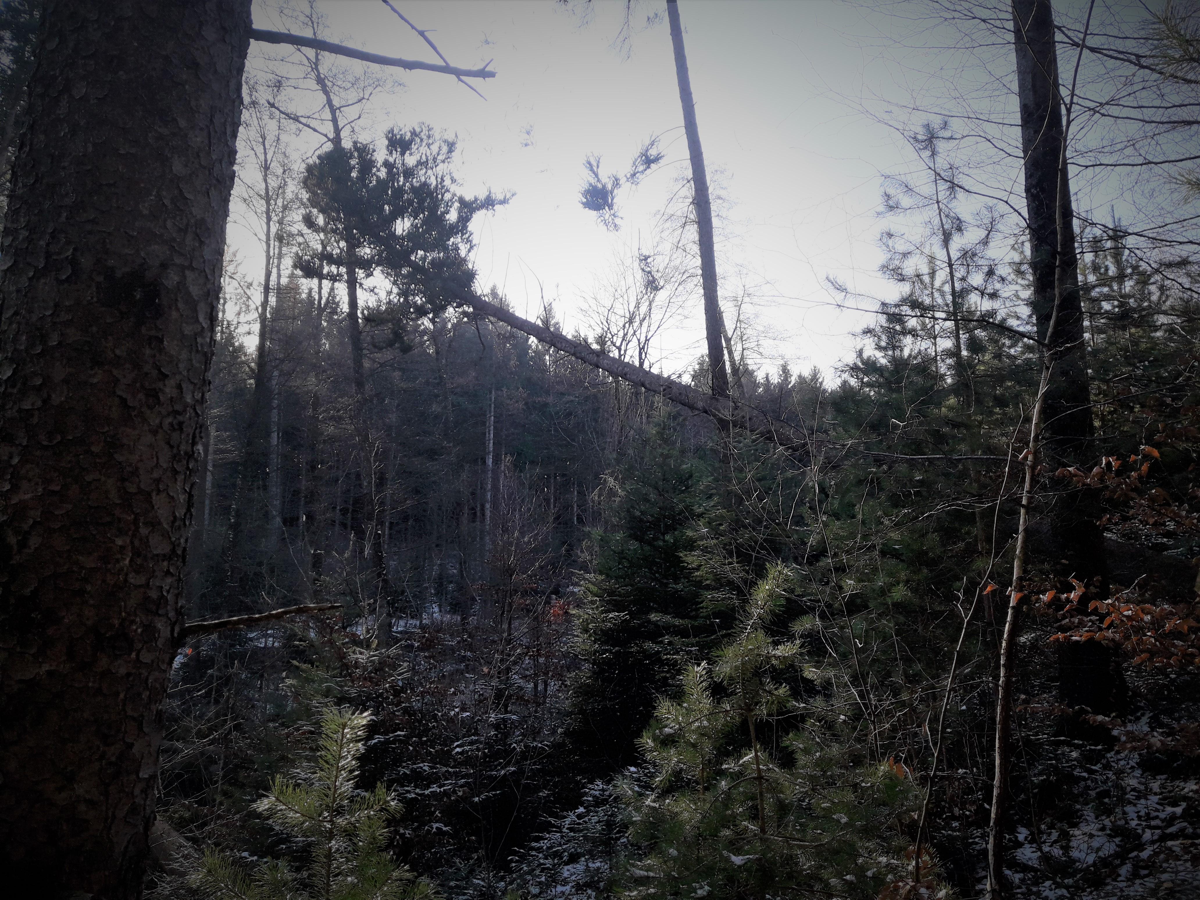 Holznutzung Böden (3).jpg