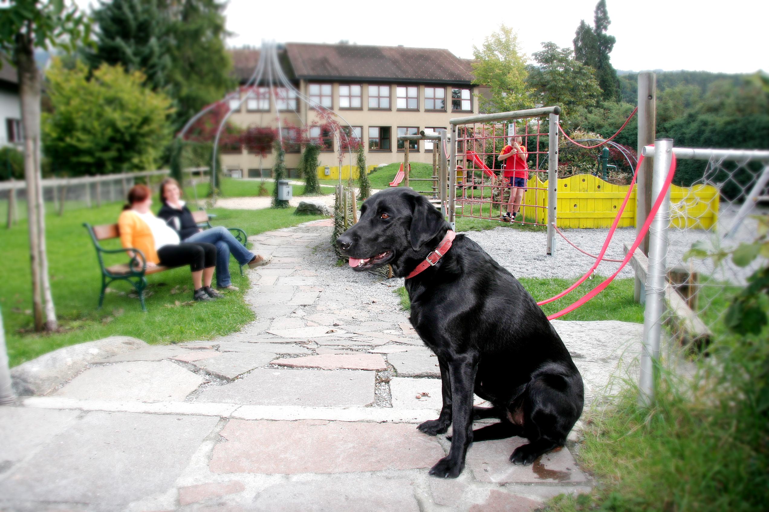 Hundehaltung.jpg